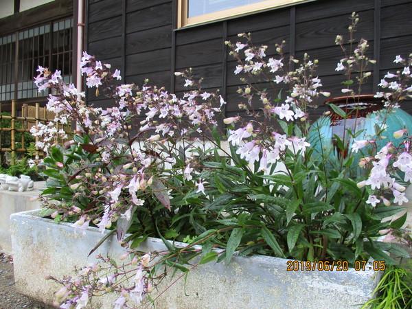 境内を彩る草花たち